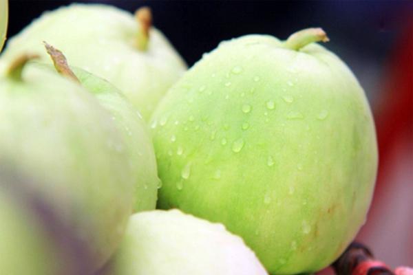 Nên mua dưa vào mùa thu hoạch