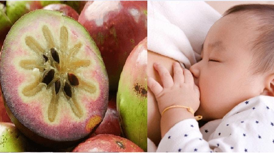 Sau sinh ăn vú sữa được không? 3 lợi ích không ngờ của vú sữa 1