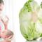 Sau sinh ăn được bắp cải không? Có bị mất sữa không?