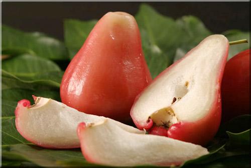 Sau sinh có được ăn quả roi không ? Quả roi chứa nhieuf vitamin và kháng chất cần thiết cho mẹ sau sinh