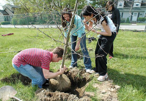 Vợ có bầu chồng không nên trồng cây