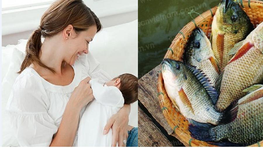 Sau sinh có ăn được cá rô phi không? Khi nào nên ăn cá sau sinh? 1