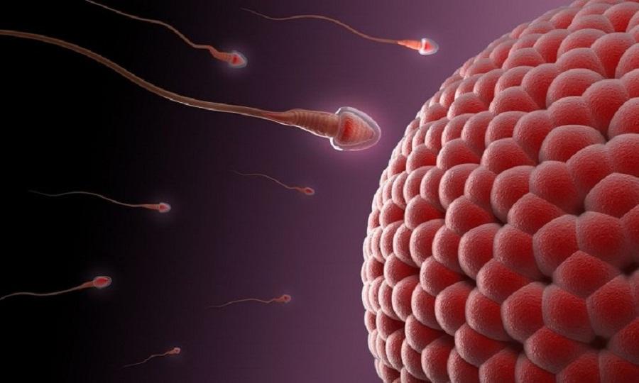 Tinh trùng y sống được bao lâu trong tử cung? Làm sao để tăng tuổi thọ 1