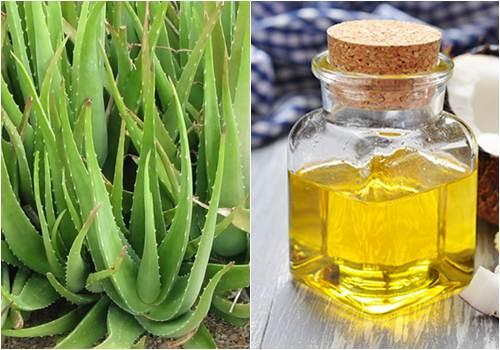 Cách trị rạn da bằng nha đam và dầu dừa